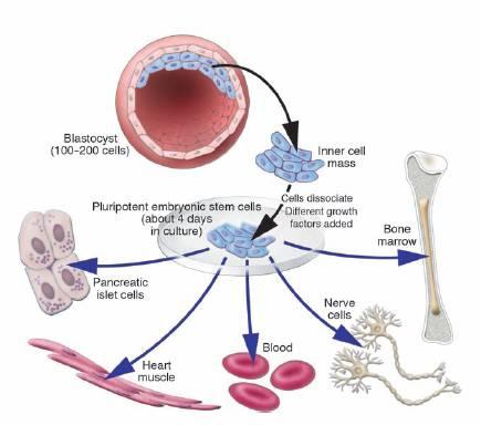 amyotrofisk lateralsklerose artikkel